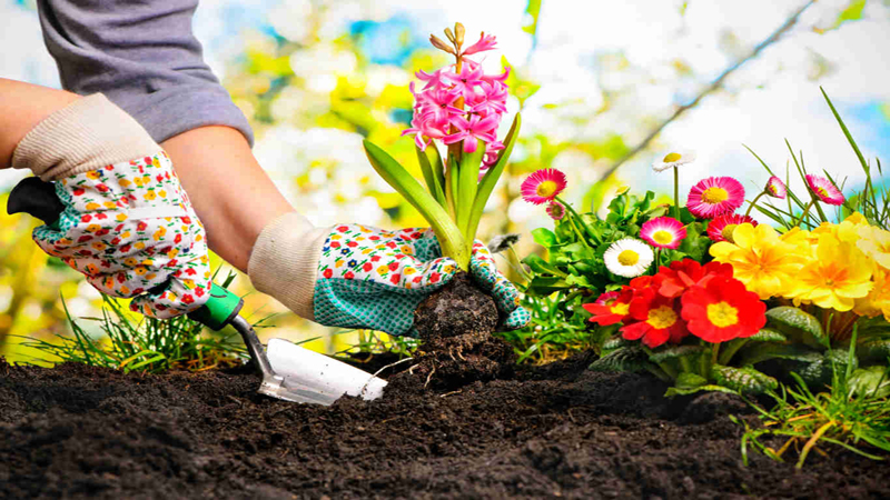Stylish and simple Gardening ideas